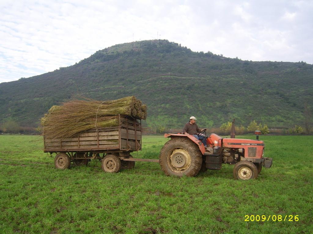 Traslado de Mimbre desde el campo a los pozos de cultivo