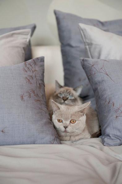 © Anja Hölper, Vom Glück mit Katzen zu wohnen, Callwey Verlag