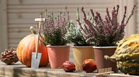 herbstbepflanzung f r den garten und balkon k belbepflanzung blog sina s welt kreativ. Black Bedroom Furniture Sets. Home Design Ideas
