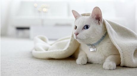 Teppichboden, Teppich, Katze, Bodenfliesen