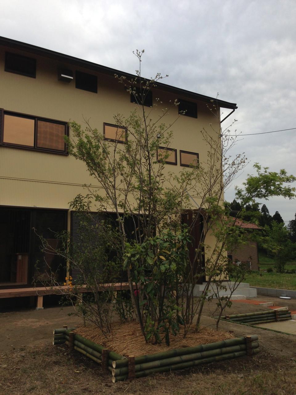 北のスポット雑木 高田造園設計とコラボ