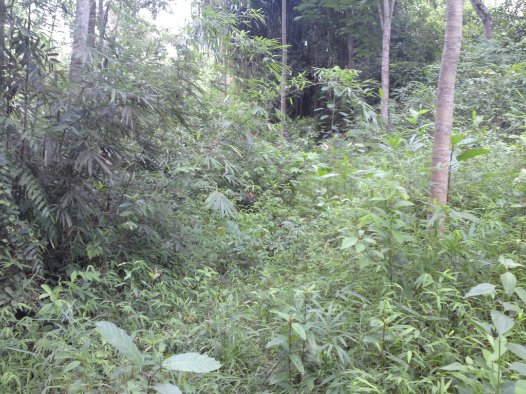 Land for sale in Kukkak, Thailand.