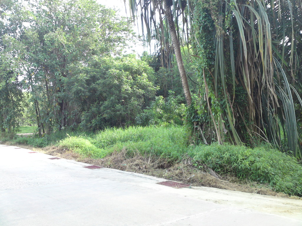 Land for sale in Khukkhak, Thailand.