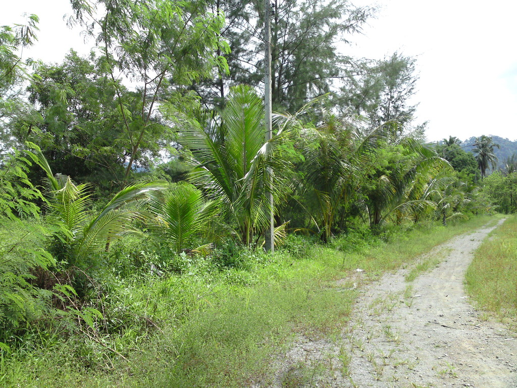 Land for sale in Bang Niang- Khao Lak- Thailand