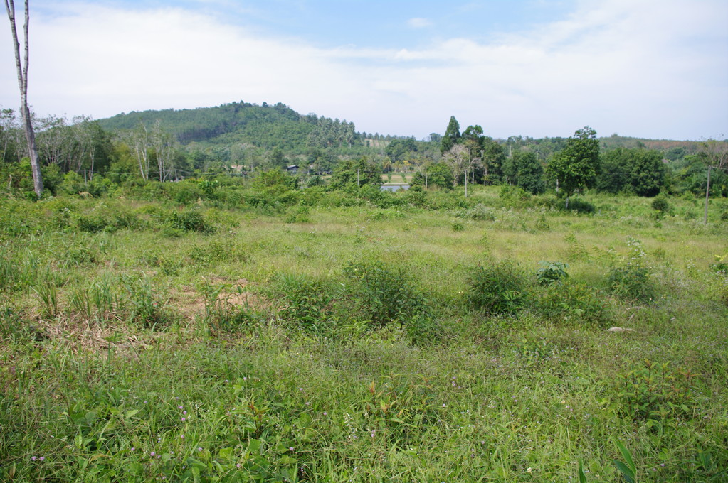 Land for sale near Khao Lak, Thailand.(10')