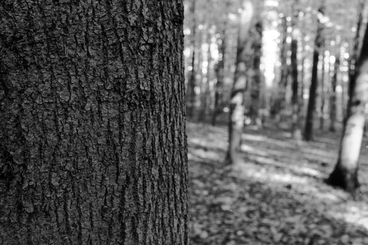 Portraits d'arbre I