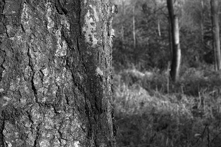 Portraits d'arbre II