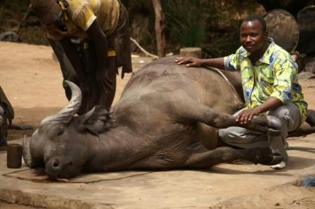 Accès à la viande de chasse (Campement de Tanongou Mars 2011)
