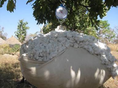 Commerialisation du Coton