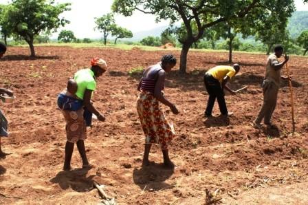 Le semis 2013 - Benin juin 2013
