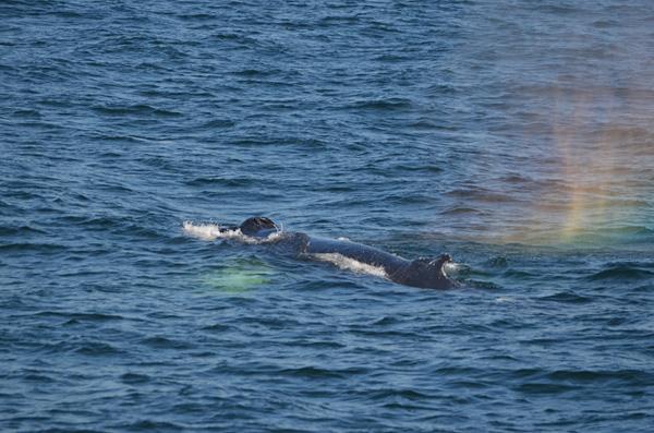 Nach 1 Stunde sehen wir die ersten Wale