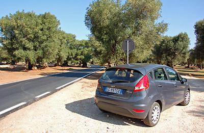 ... mit unserem Mietauto fahren wir durch endlose Olivenhaine zur Küste.