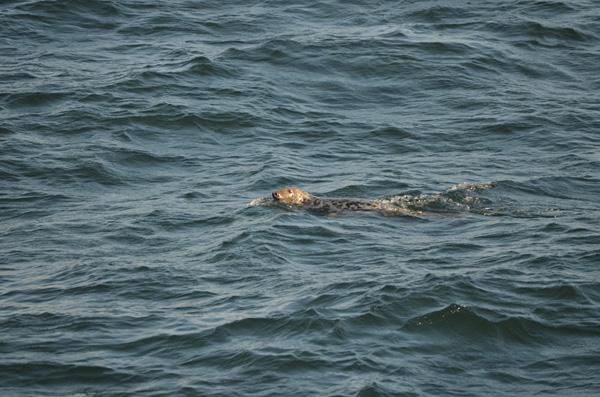 Auch Seelöwen kommen dicht an das Boot