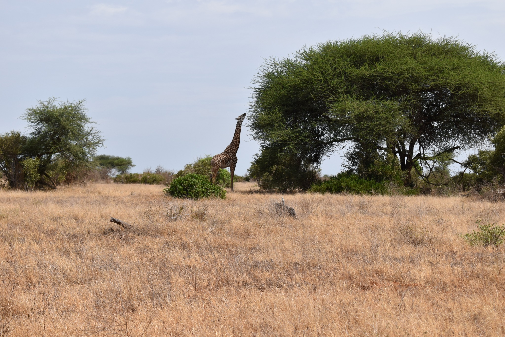 Tsavo national territory