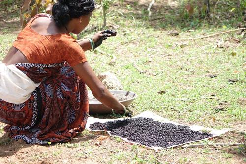 Frau weicht Bio-Saatgut ein