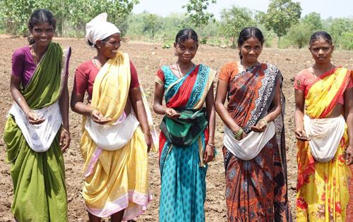 Frauen in Indien mit Saaten für Bio-Baumwolle