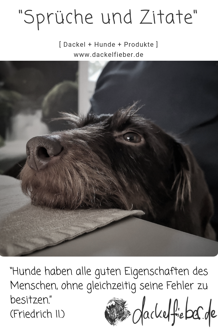 Hunde Zitat