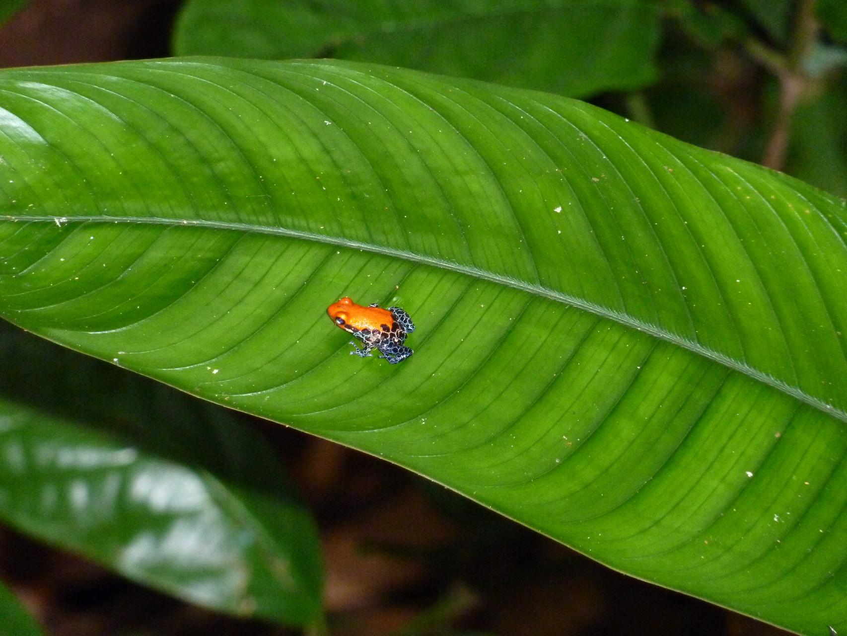 Das Peruanische Amazonasgebiet entdecken mit PERUline