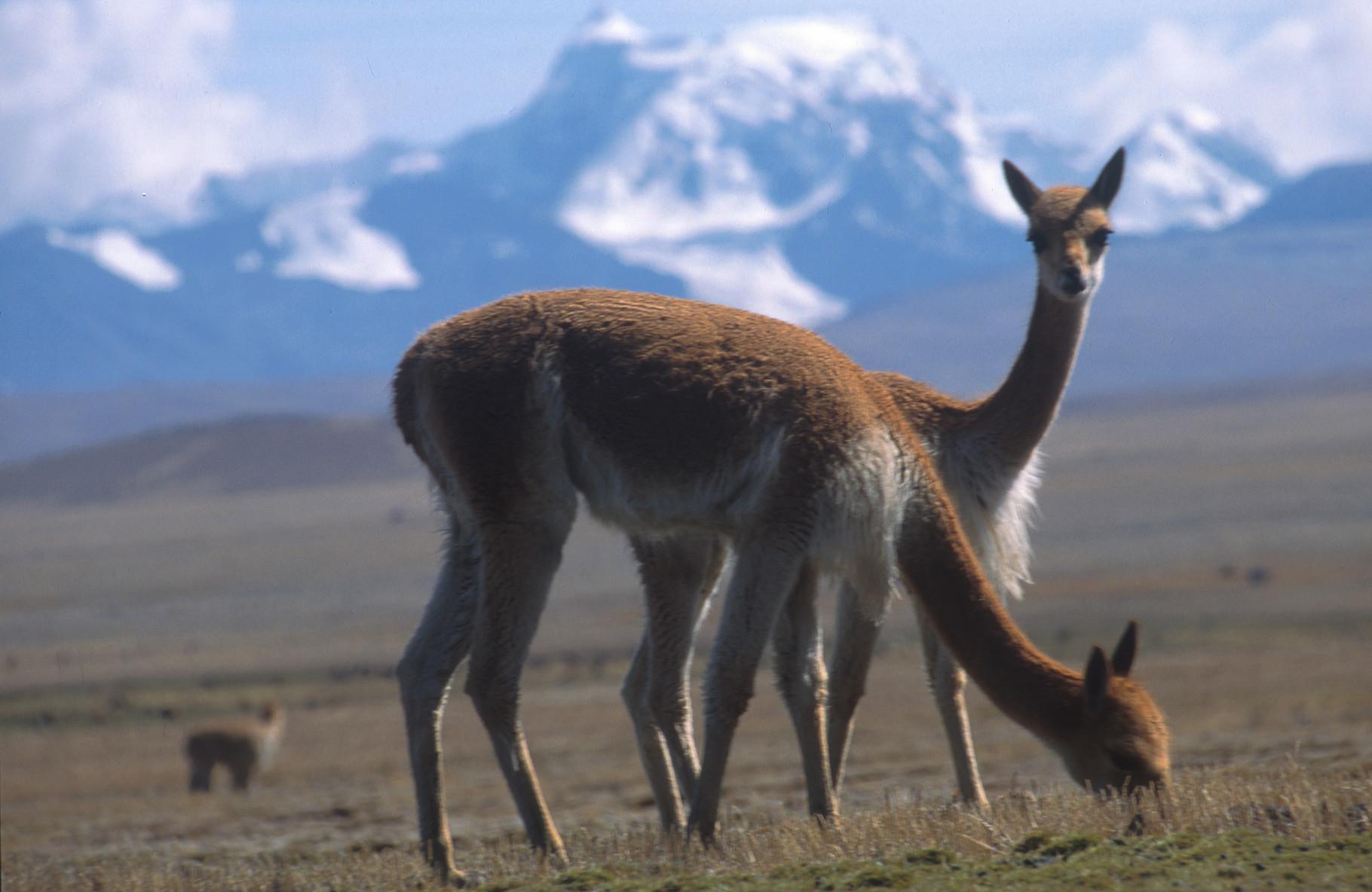 Durch die Anden Perus mit PERUline