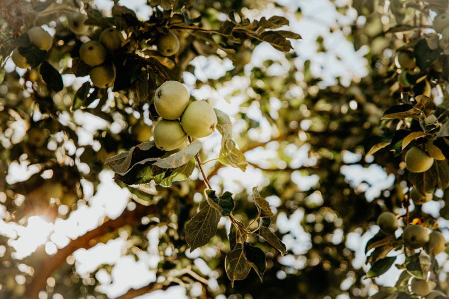 Obstbäume überall