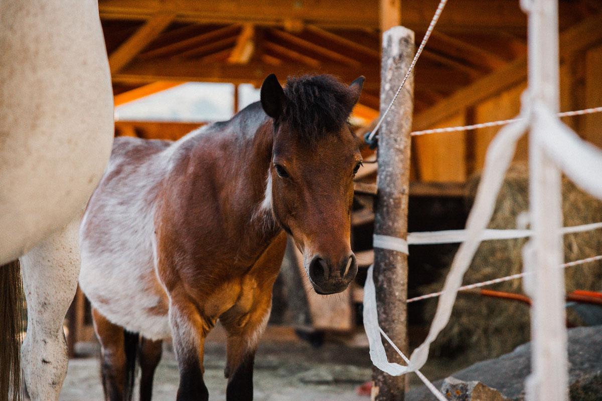 Samy, das Pony