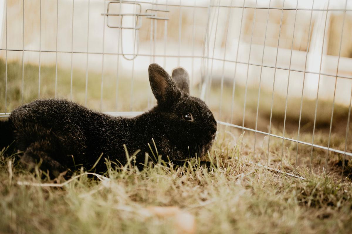 Moritz, das Kaninchen