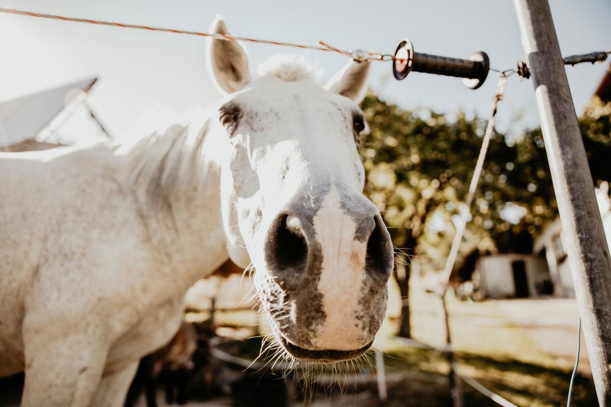 Rico, das Pferd