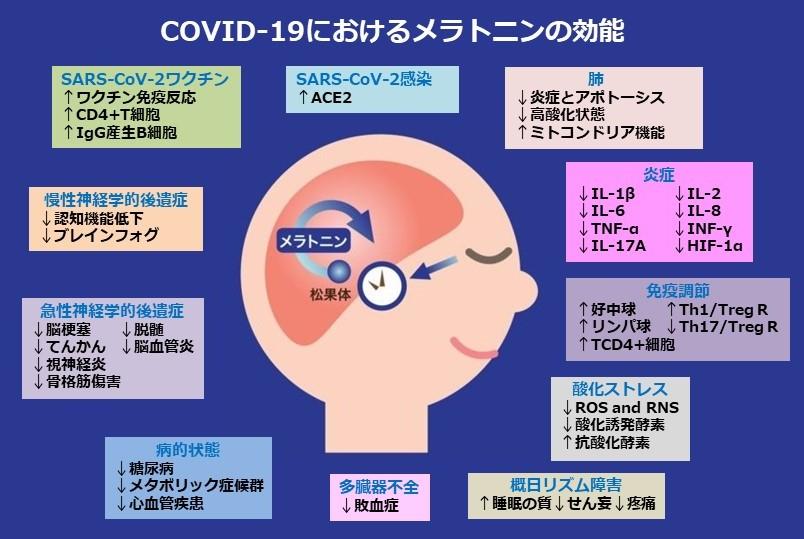 メラトニンはCOVID-19のシルバーバレット