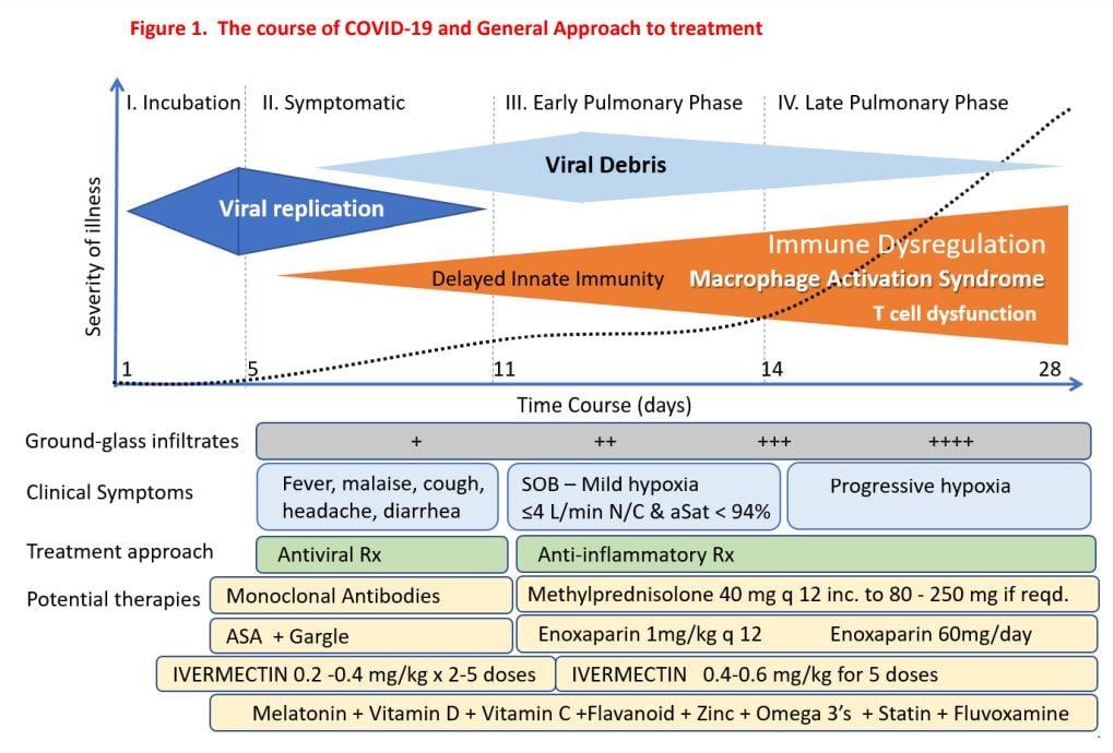 COVID-19の病態生理
