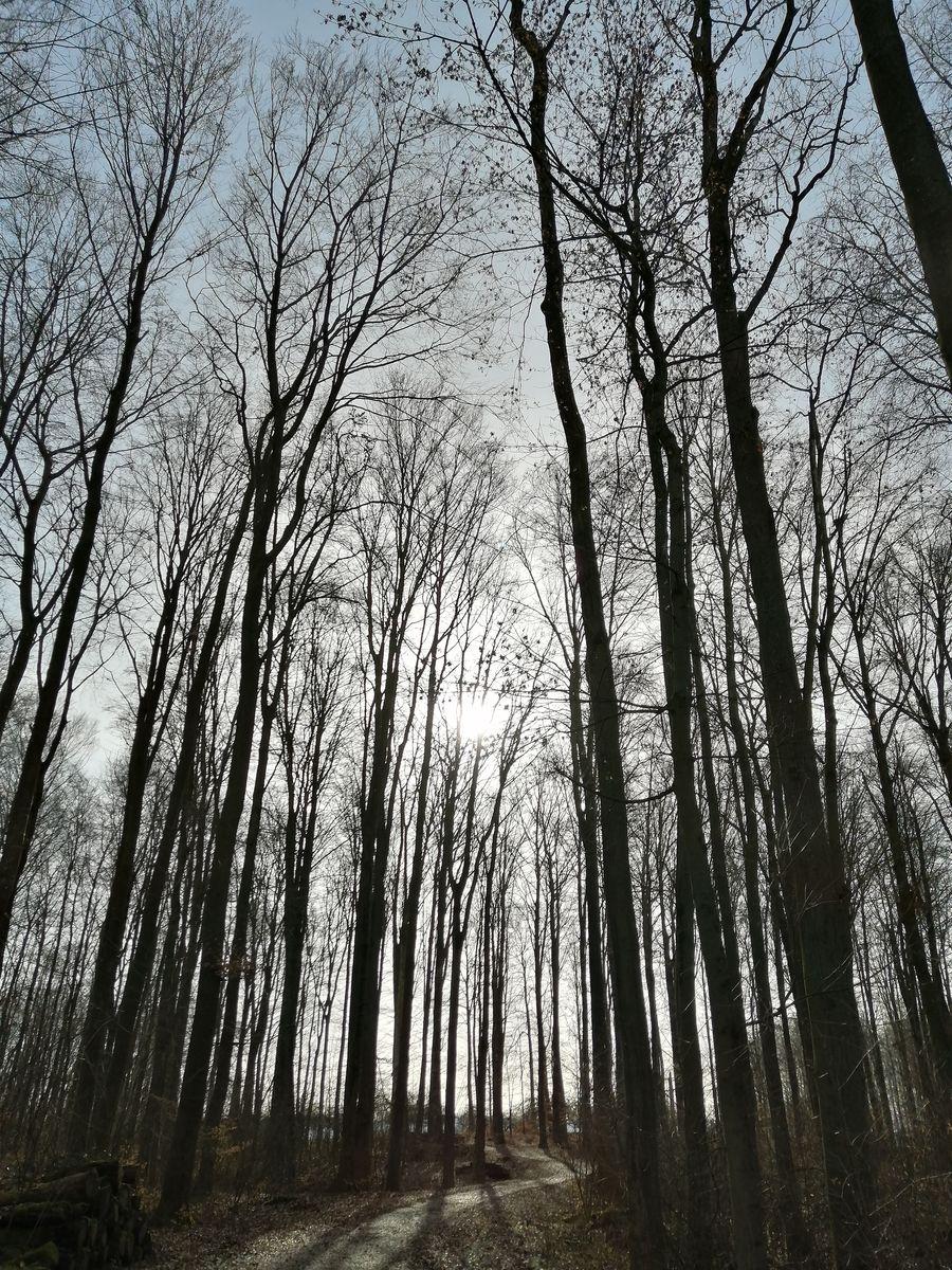 Frühling - die Wandlungsphase Holz