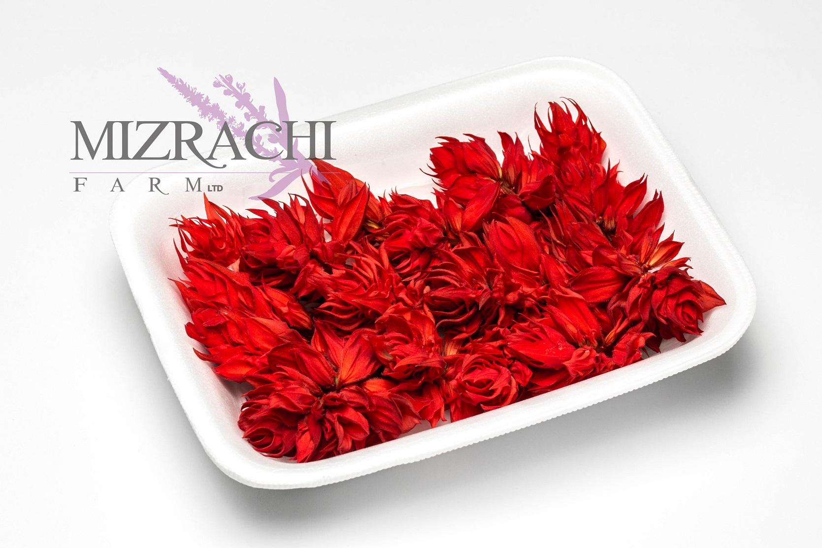 Red Salvia