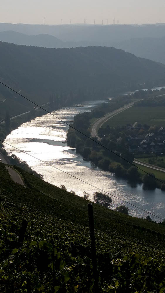 """Gold-Silber-Band"" Mosel am Morgen. Herbsttag."