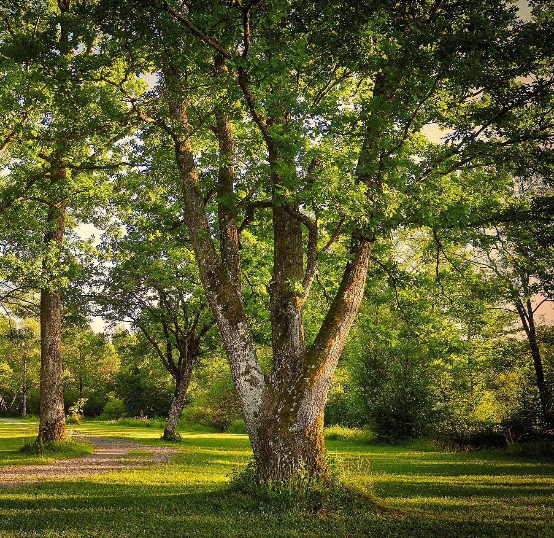Der Baum als kraftvolles Bild und Ausdruck deiner inneren Dynamik