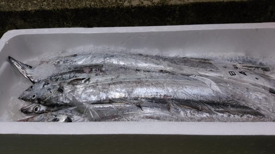 寺泊産 太刀魚