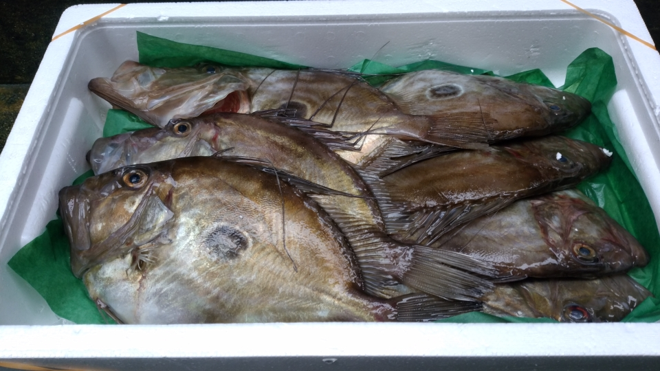 岩手県産 的鯛