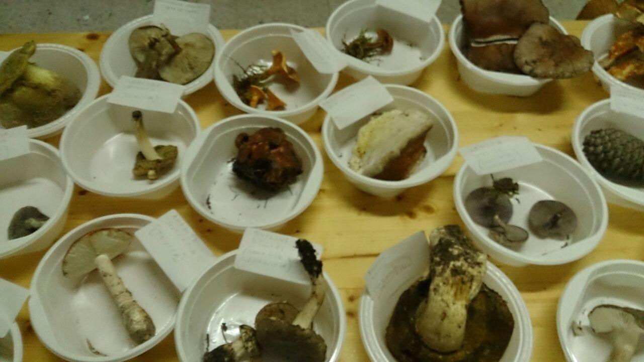 VII Encuentro micologico