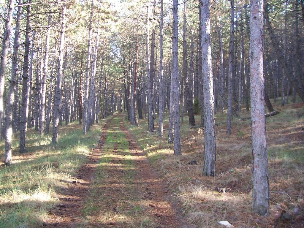 Pinar 2005
