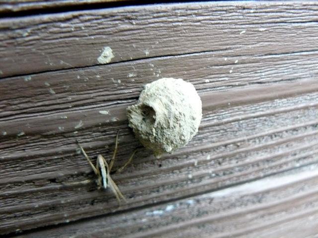 徳利蜂の巣