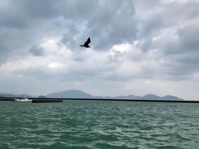 23日 福井 小浜港 カモメ