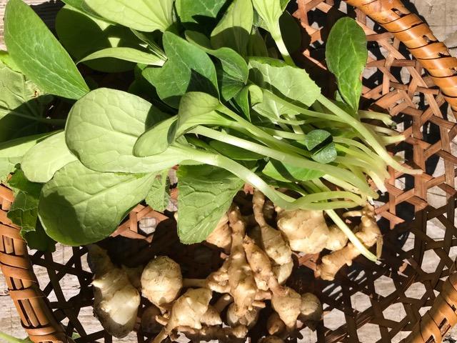 カボチャの若芽と菊芋