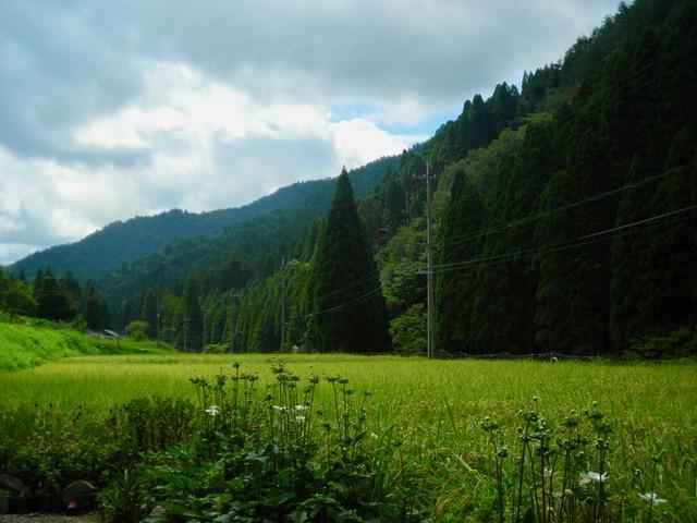 トミコさんの家の前 稲田