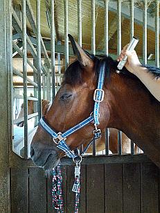 PowerTube Behandlung an der Halswirbelsäule eines Pferd Warmblut Sportpferd