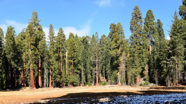On Big Tree Trail
