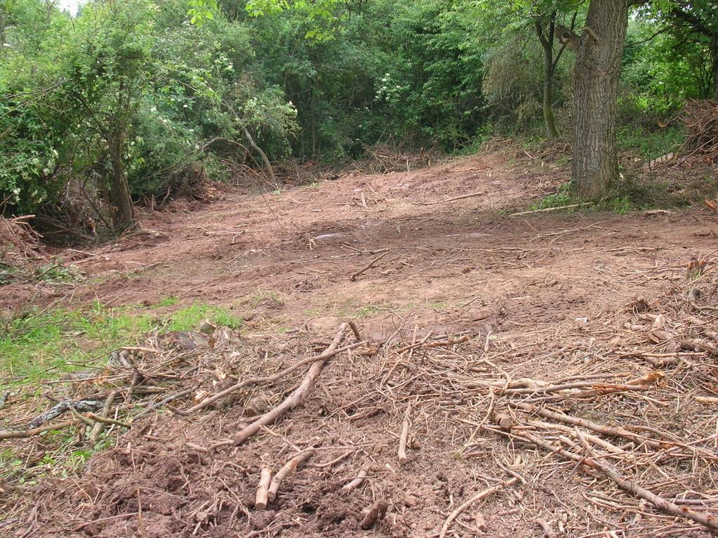 Hier sind schon viele Sträucher und Bäume gefällt