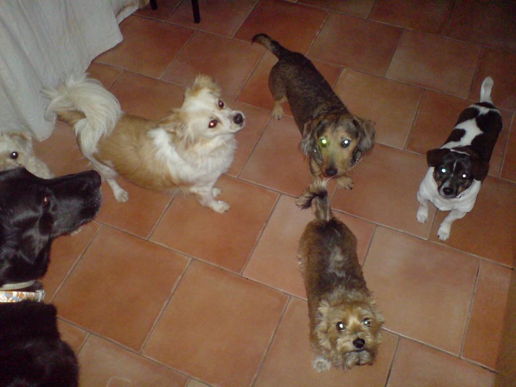 Gäste und eigene Hunde