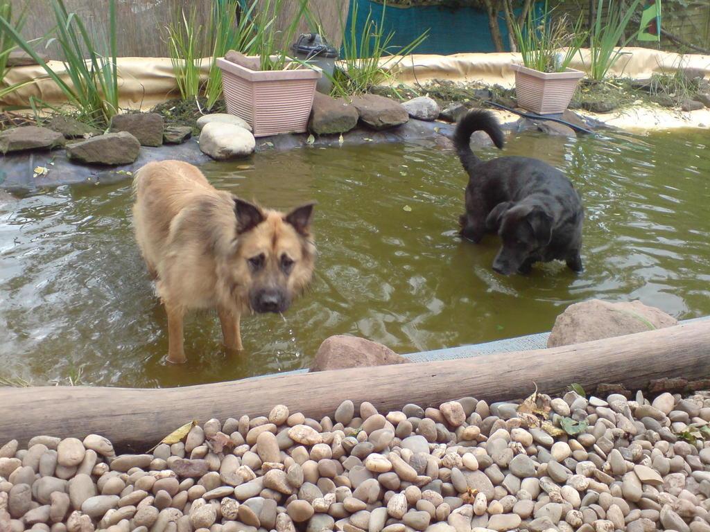 Jerry und Tico bei ihrer Lieblingsbeschäftigung