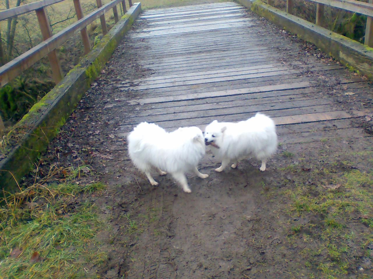 Avaro und Bailey, beim kampf um das Stöckle