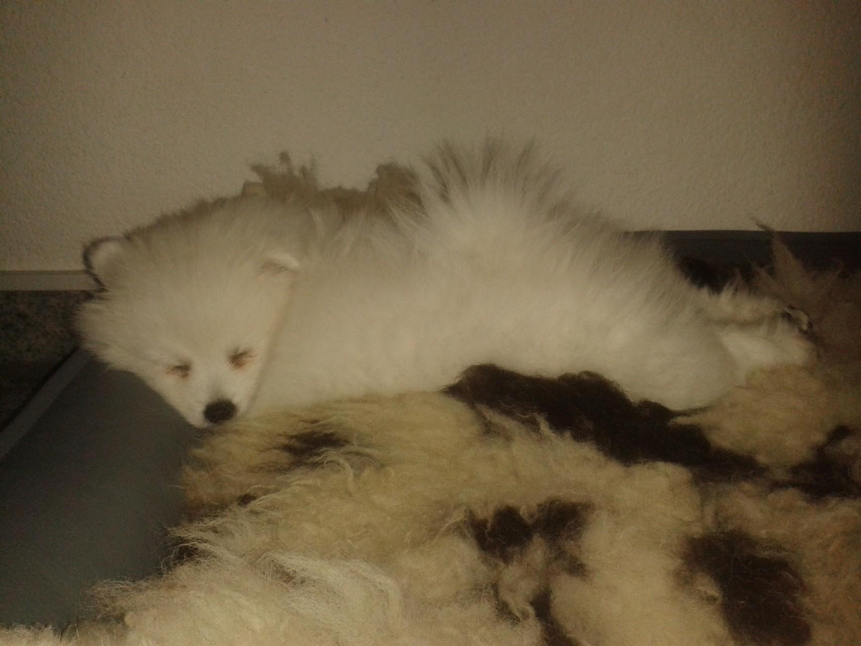 müde Fibi