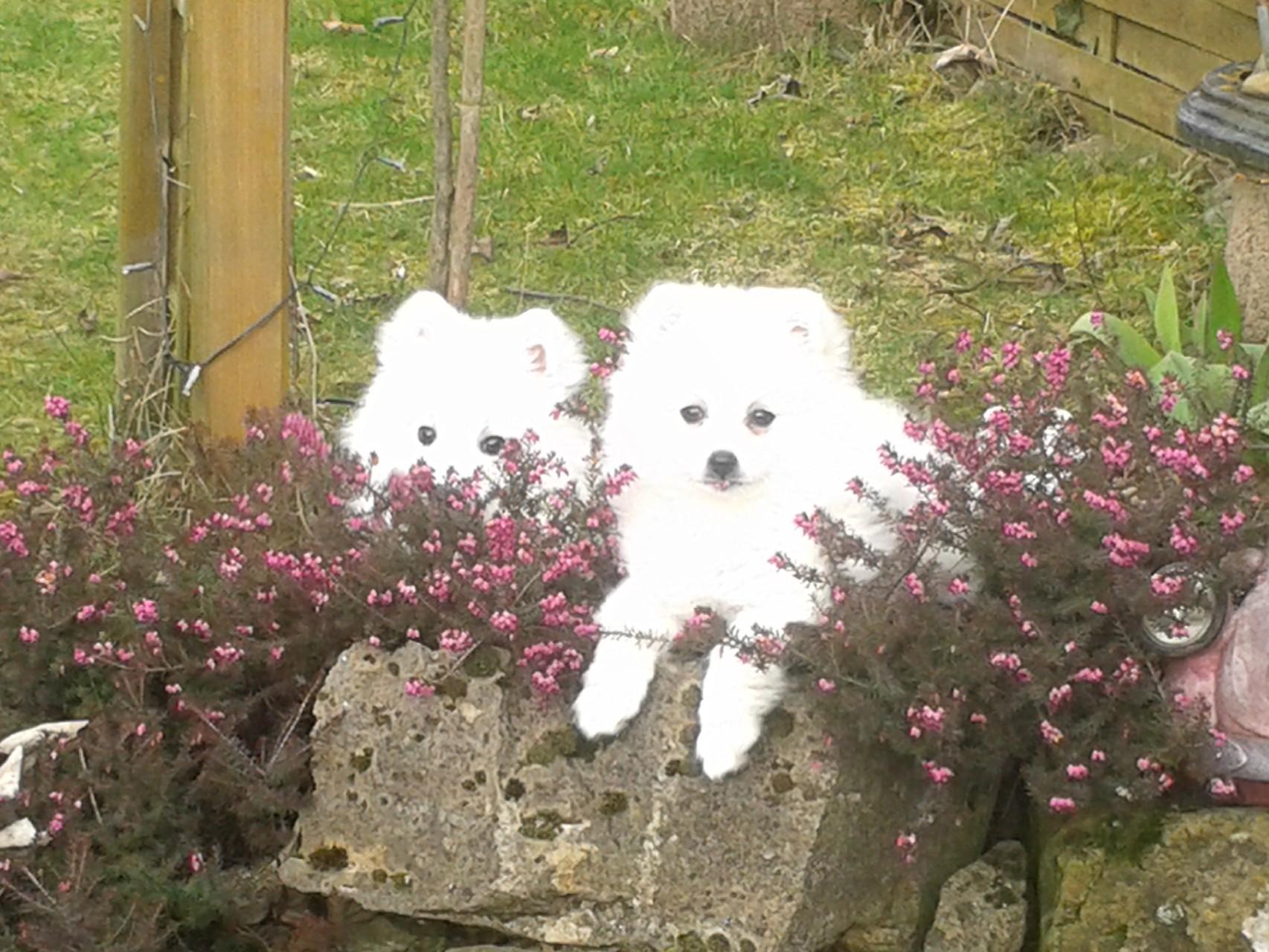 Fibi im Garten