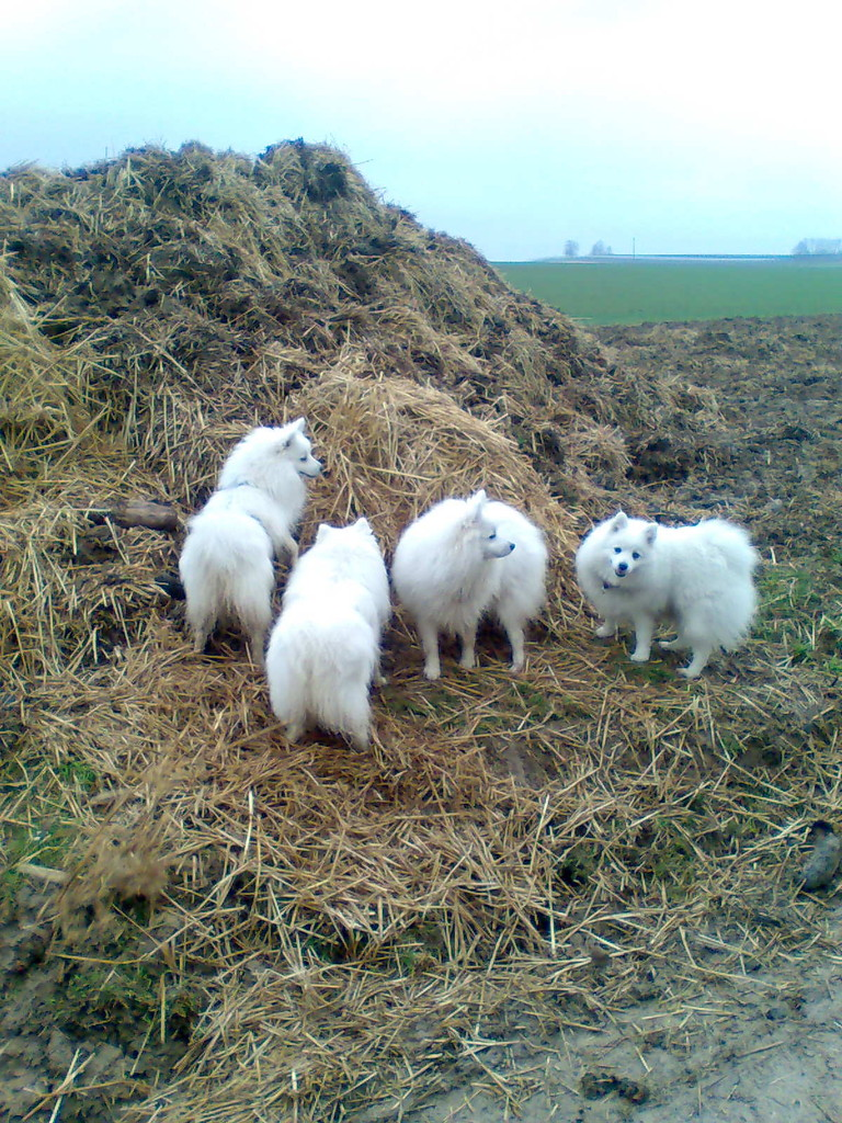 Bailey, Ami, Avaro und Mama Quiana im Misthaufen